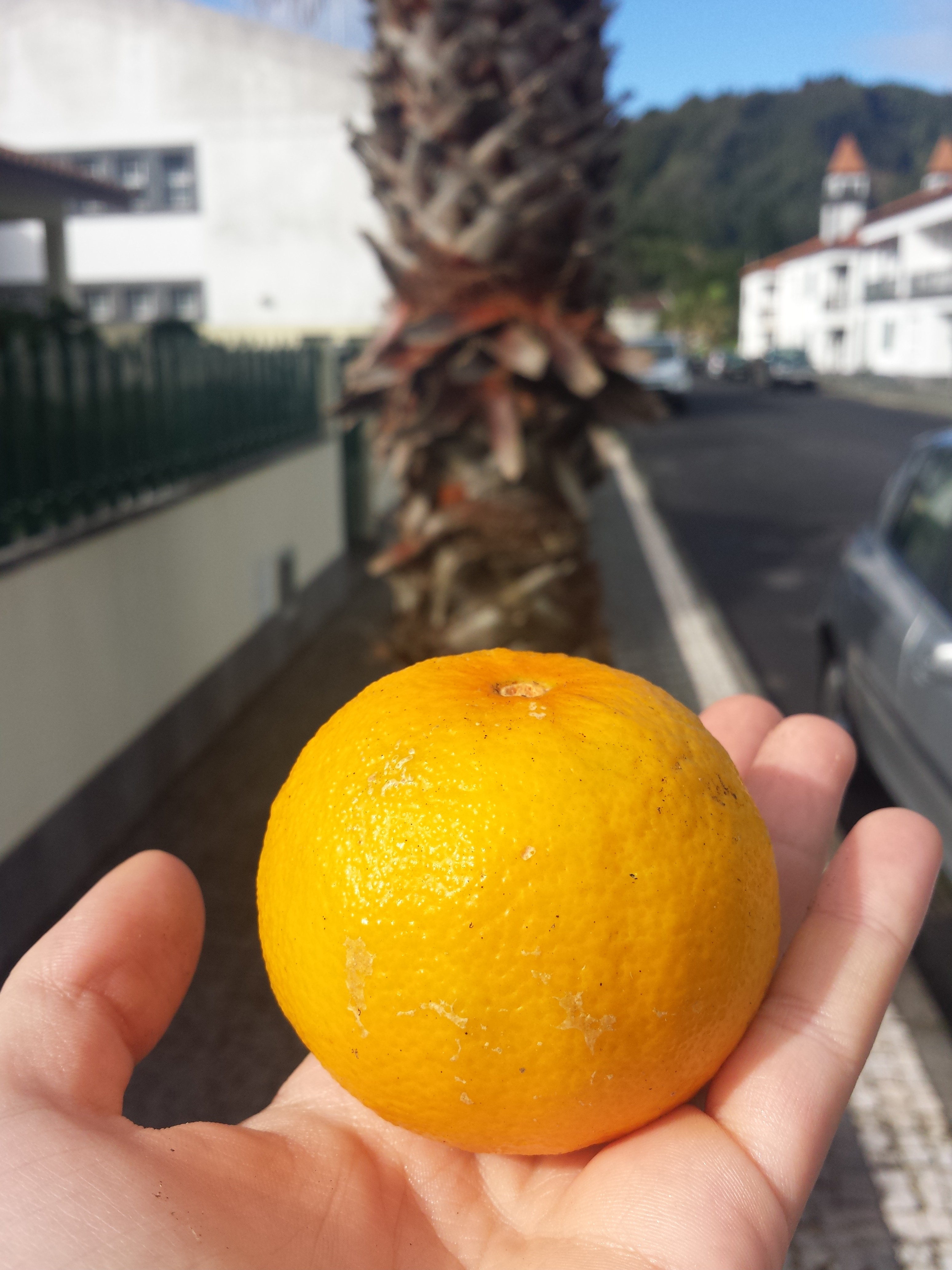Orange in Sao Miguel