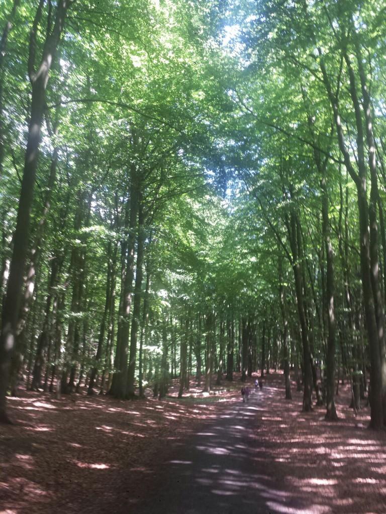 Buchenwald Nationalpark Zentrum Jasmund