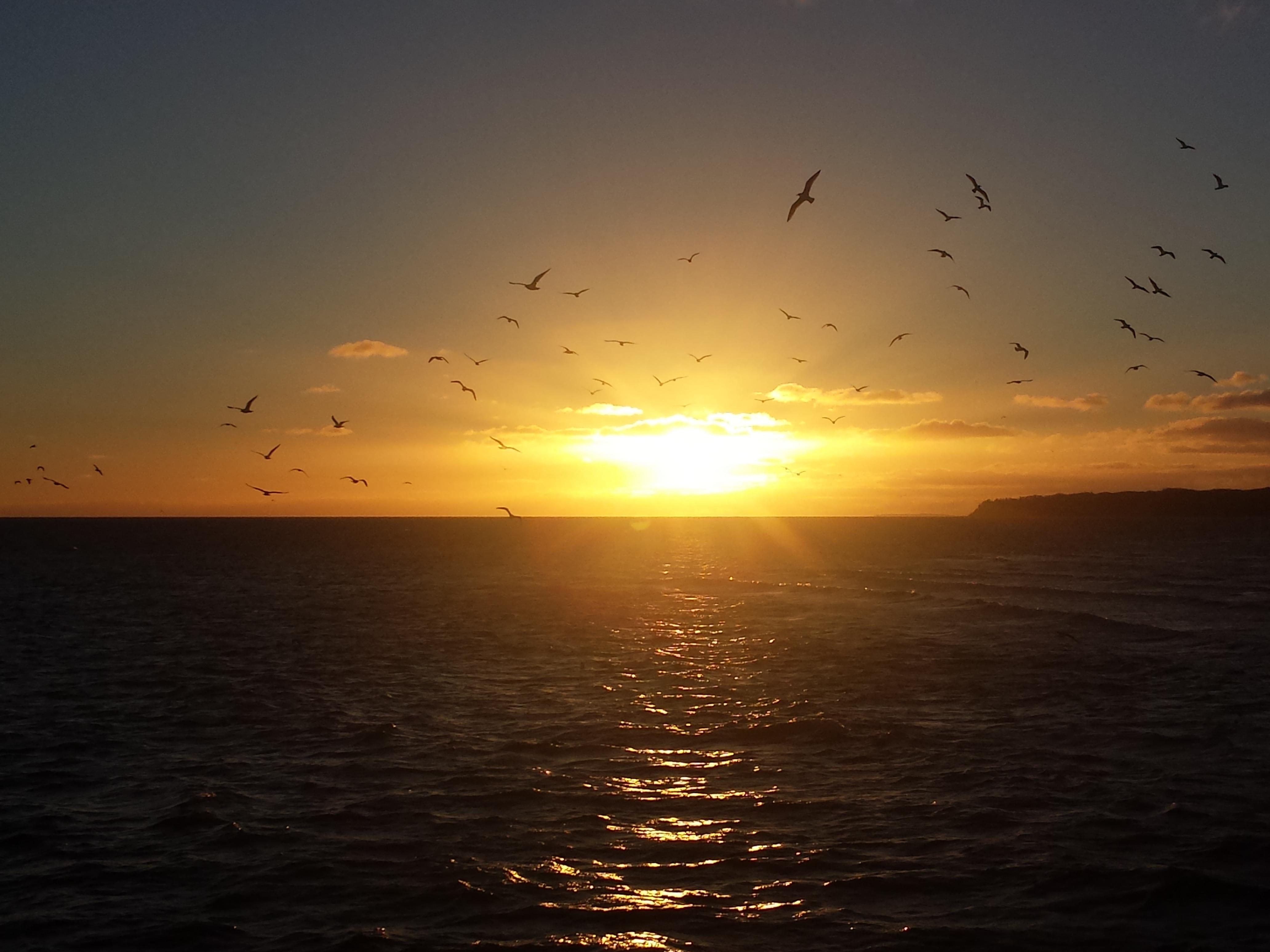 Sonnenaufgang Ruegen Insel Voegel Sellin