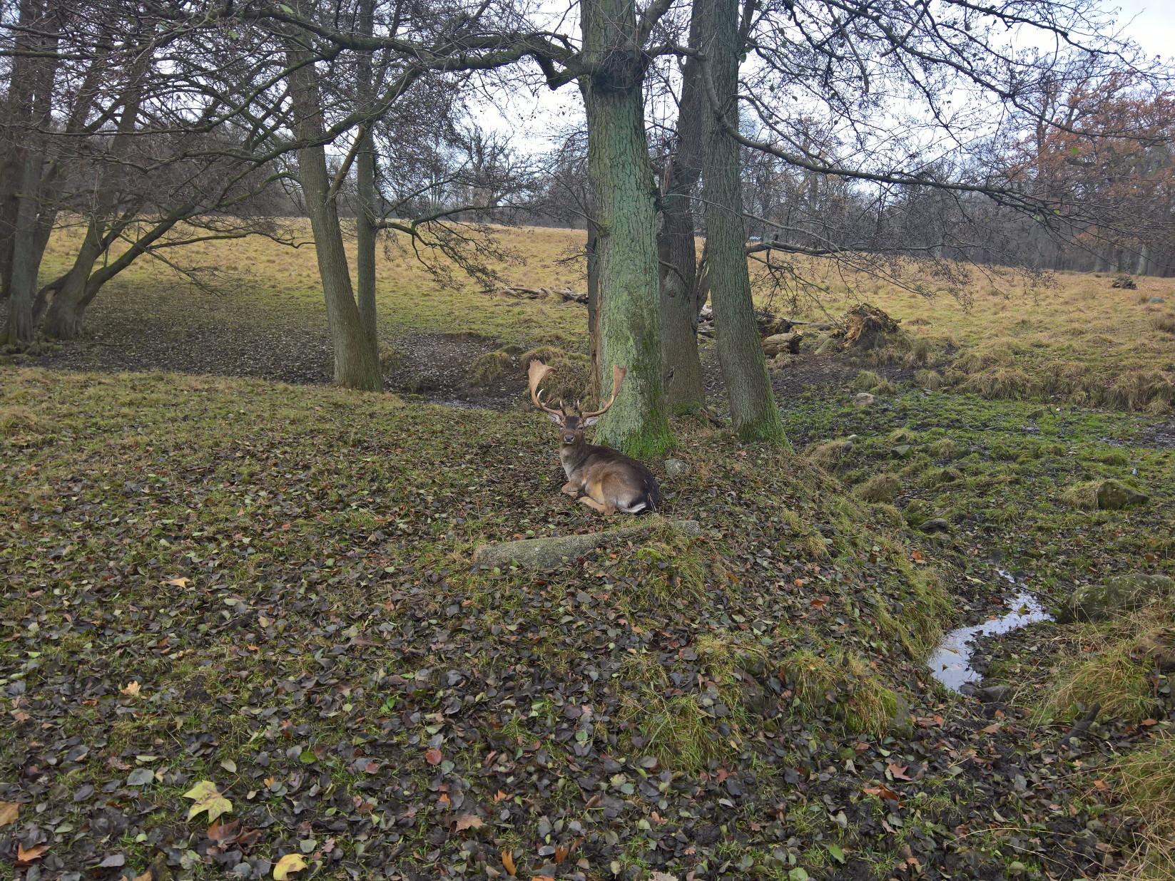 Putbus Hirsche Rehe Ruegen Insel Wildpark