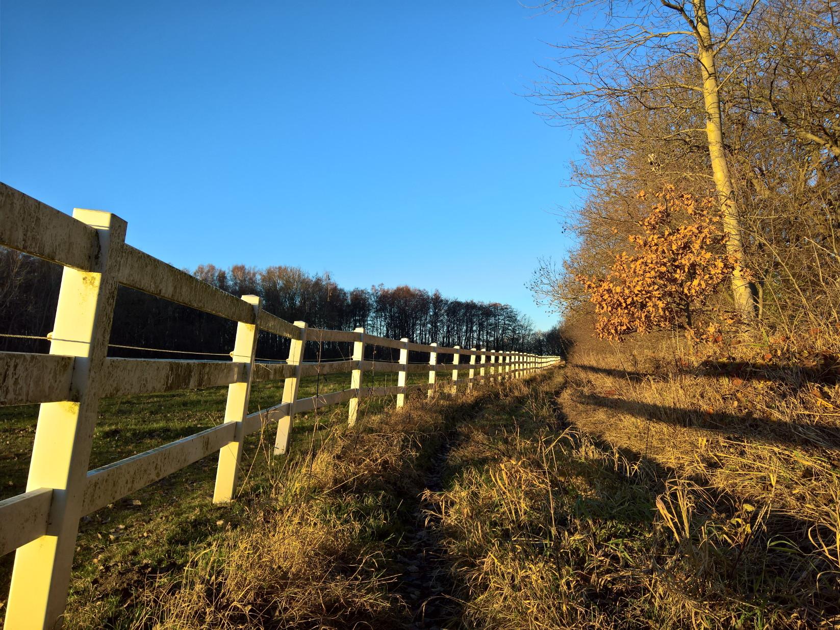 Ralswiek Koppel Stoertebecker Pferde Ruegen Insel nahe Bodden