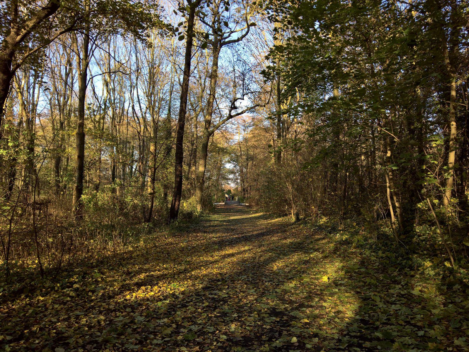 Wald in Jungfernheide Park Berlin