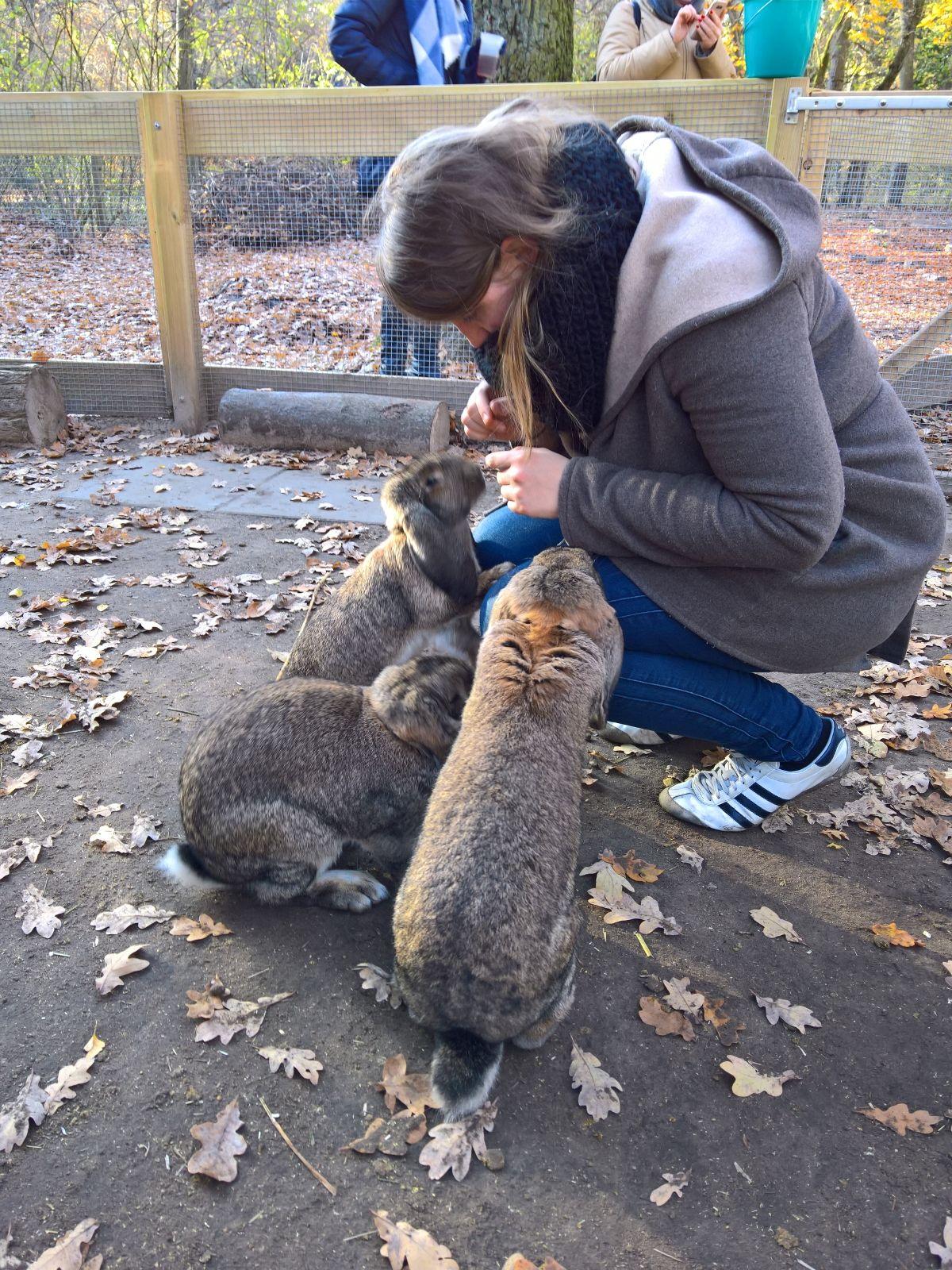 Kaninchen Jungfernheidepark Berlin im Gehege