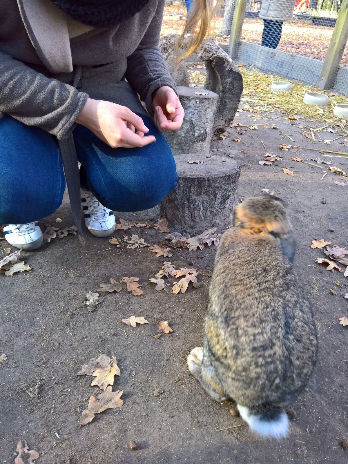 Kaninchen Jungfernheidepark