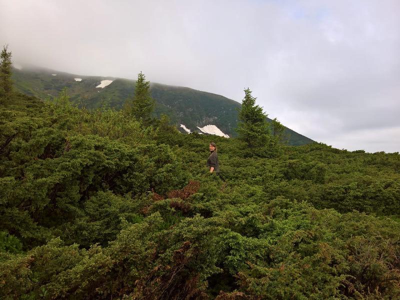 hoverla berg ukraine