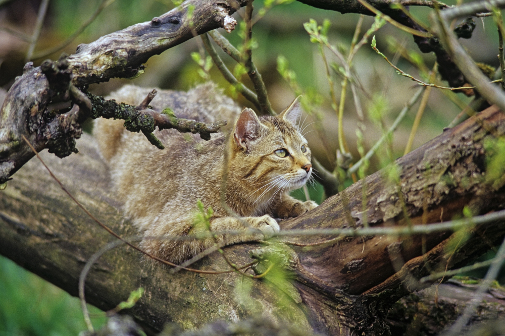 tipps bad langensalza wildkatze nationalpark hainich
