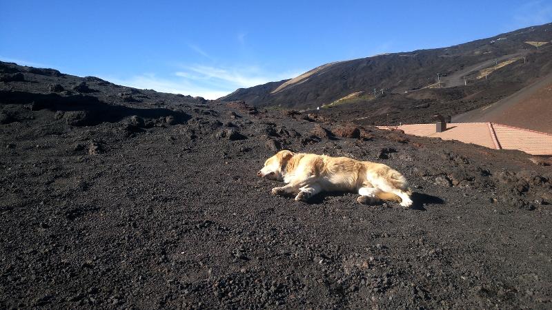 aetna catania siizilien hund auf lava
